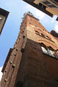 Torre Guinigi Italie